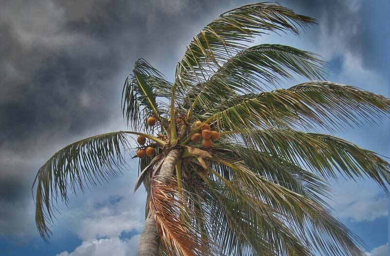 Tampa Areas Most Trusted Storm Protection Company